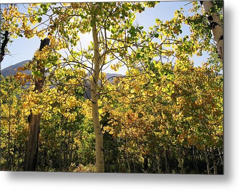 Landscape Metal Print featuring the photograph Light And Leaves by Caroline Clark