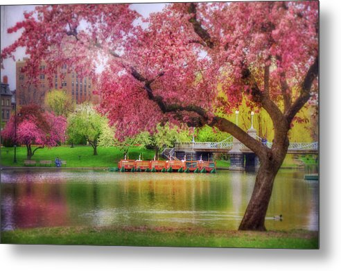 Boston Swan Boats Metal Print featuring the photograph Spring Afternoon In The Boston Public Garden - Boston Swan Boats by Joann Vitali