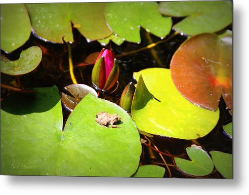 Frog Metal Print featuring the photograph Tiny Frog by Tina Meador