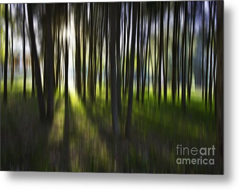 Trees Abstract Tree Lines Forest Wood Metal Print featuring the photograph Tree Abstract by Avalon Fine Art Photography