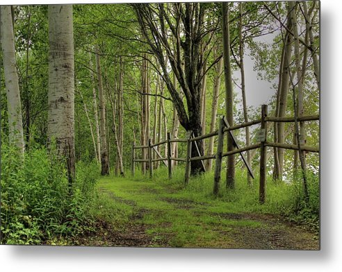 Nature Metal Print featuring the photograph Birch Pathway by Coreena Hale