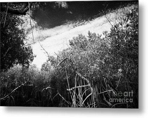 Florida Metal Print featuring the photograph Canopy Of The Mangrove Forest In The Florida Everglades Usa by Joe Fox