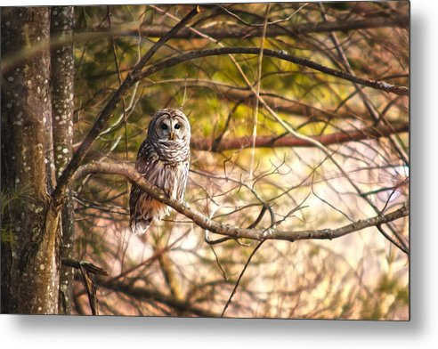 Barred Owl Metal Print featuring the photograph Prey Tell by Robert Clifford
