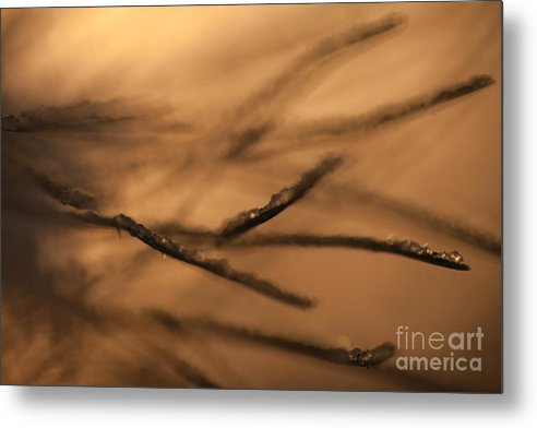 Free Metal Print featuring the photograph See Freely by Sue OConnor