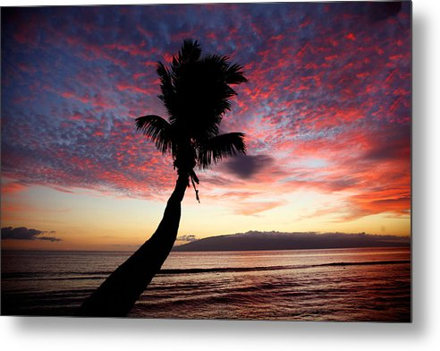 Sunset Metal Print featuring the photograph Lone Palm by Jama Pantel