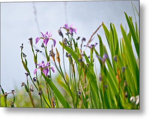 Flowers Metal Print featuring the photograph Wild Flowers by Vijay Lapsia