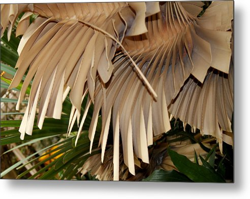 Bark Metal Print featuring the photograph Palm Bark by Kenna Westerman