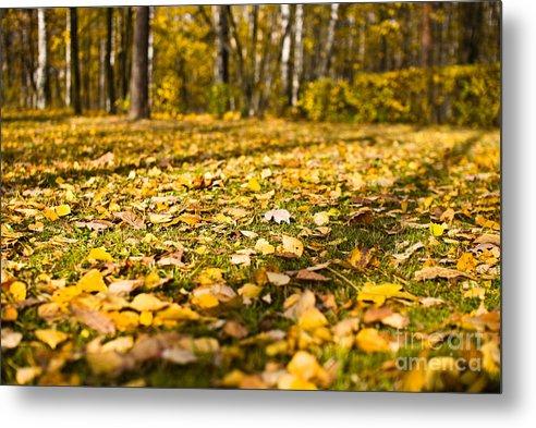 Autumn Metal Print featuring the photograph Autumn Carpet by Vadim Grabbe