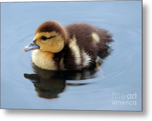 Baby Metal Print featuring the photograph Duckling by Jeannie Burleson