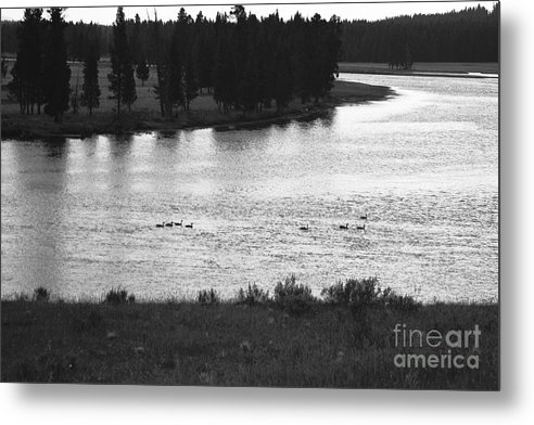 Wildlife Metal Print featuring the photograph Dusk At The Yellowstone River by Susan Chandler
