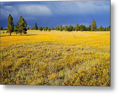 Evening Metal Print featuring the photograph Evening Contrast by Barry Shaffer