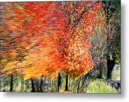 Tree Metal Print featuring the photograph Finate by Robert Shahbazi