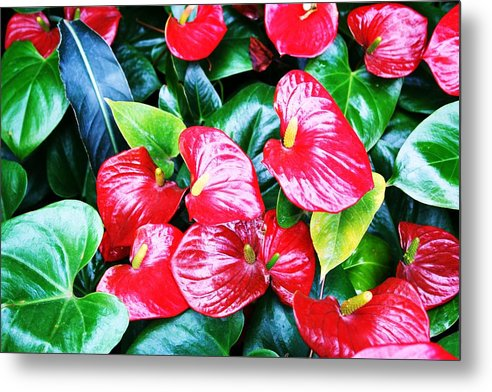 Flowering Plant Metal Print featuring the photograph Flowering Plant by Michael C Crane