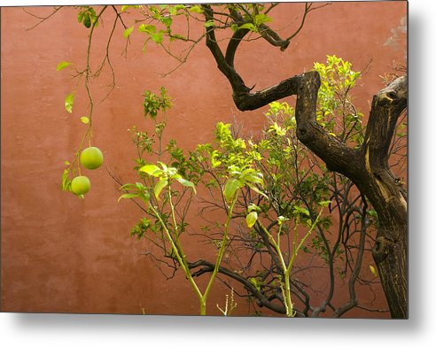 Nature Metal Print featuring the photograph Garden Of The Alcazar by Jan Kapoor