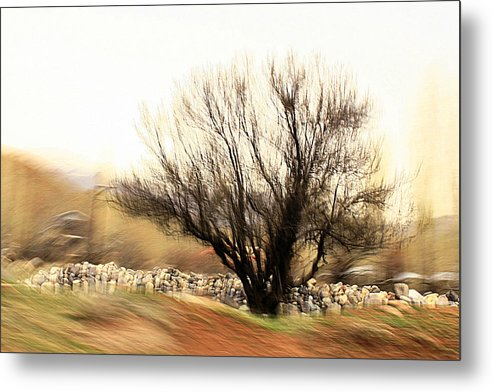 Trees Metal Print featuring the photograph Humble by Robert Shahbazi