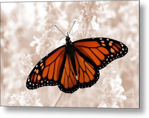 Monarch Metal Print featuring the photograph Monarch by Jeannie Burleson