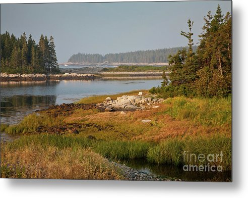 Acadia National Park Metal Print featuring the photograph Morning Light At Schoodic by Susan Cole Kelly