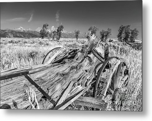 Old Rotting Wagon Metal Print featuring the photograph Old Wagon, Jackson Hole by Daryl L Hunter
