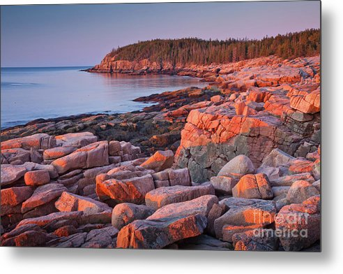 Acadia National Park Metal Print featuring the photograph Otter Cliffs by Susan Cole Kelly
