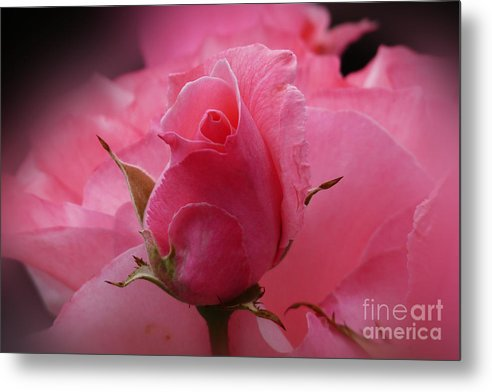 Baar Metal Print featuring the photograph Pink Dream by Lutz Baar