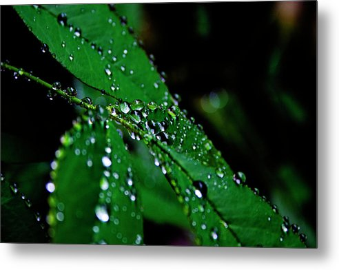 Raindrops Metal Print featuring the photograph Raindrops In My Garden 1 by Toni Hopper