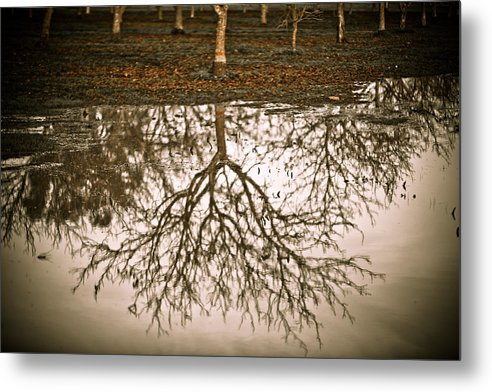 Nature Metal Print featuring the photograph Roots by Derek Selander