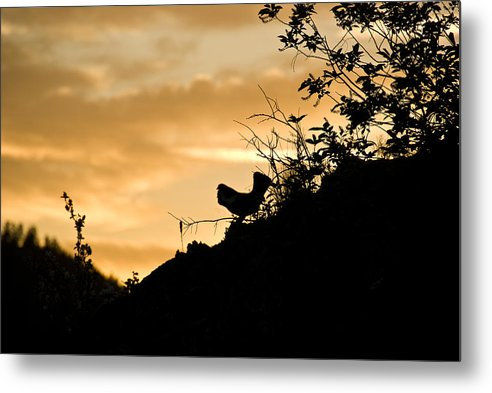 Metal Print featuring the photograph Ruffle Grouse Dusk by JK Photography