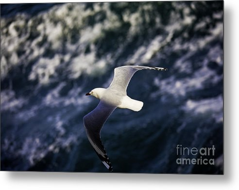 Seagull Metal Print featuring the photograph Seagull In Wake by Sheila Smart Fine Art Photography