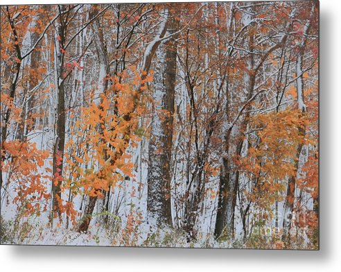 Snow Metal Print featuring the photograph Seasons Overlapping by Benanne Stiens