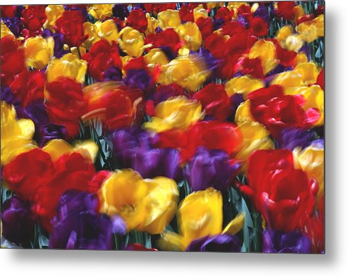 Flower Metal Print featuring the photograph Singing Tulips L062 by Yoshiki Nakamura