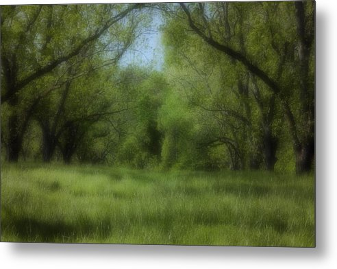 Landscape Metal Print featuring the photograph The Meadow by Ayesha Lakes