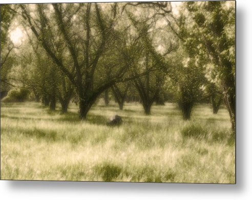 Landscape Metal Print featuring the photograph The Orchard by Ayesha Lakes
