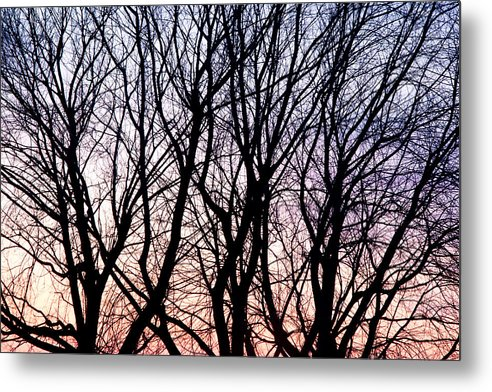Tree Metal Print featuring the photograph Through The Trees by Martin Rochefort