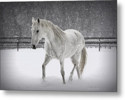 Horse Metal Print featuring the photograph Trot In The Snow by Tina Meador