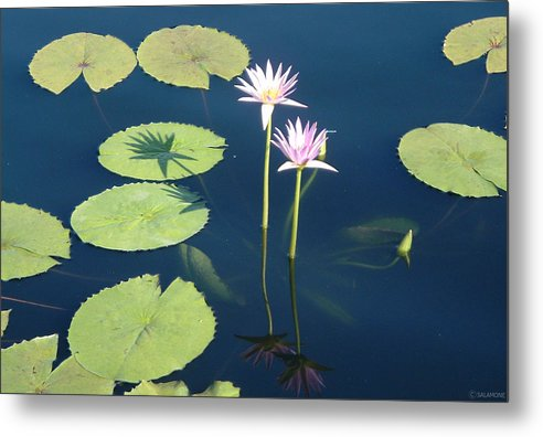 Lotus Waterlily Lilypad Water Pond Nature Flowers Shadow Metal Print featuring the photograph Shadows And Reflections by Brenda Salamone