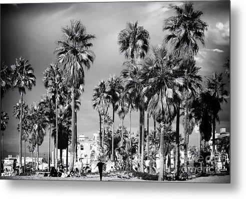 Venice Beach Palms Metal Print featuring the photograph Venice Beach Palms by John Rizzuto