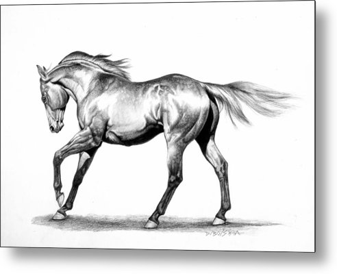 Thoroughbred Metal Print featuring the drawing Proud by Howard Dubois