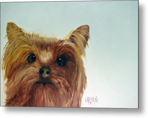 Metal Print featuring the painting Yorkshire Terrier by Dick Larsen