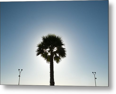 Metal Print featuring the photograph Palm Tree Silhouette by Rich Iwasaki