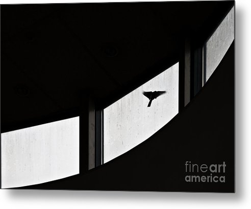 Bird Metal Print featuring the photograph Desire by Vadim Grabbe