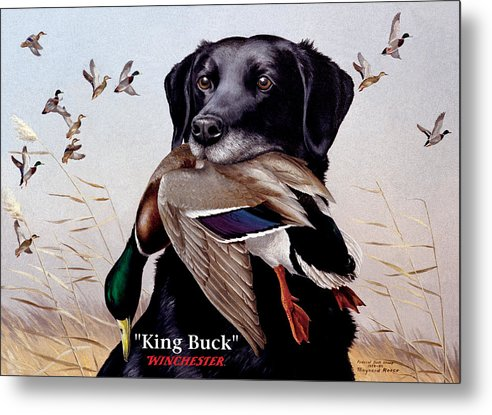 Dog Metal Print featuring the painting King Buck  1959 Federal Duck Stamp Artwork by Maynard Reece