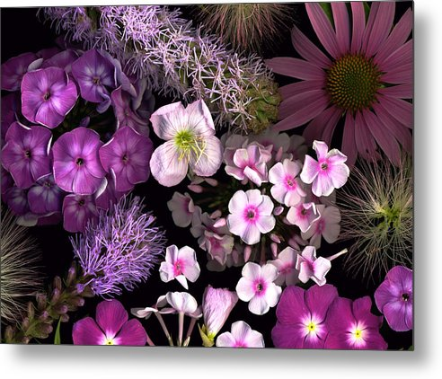 Scanography Metal Print featuring the photograph Pretty In Pink by Deborah J Humphries