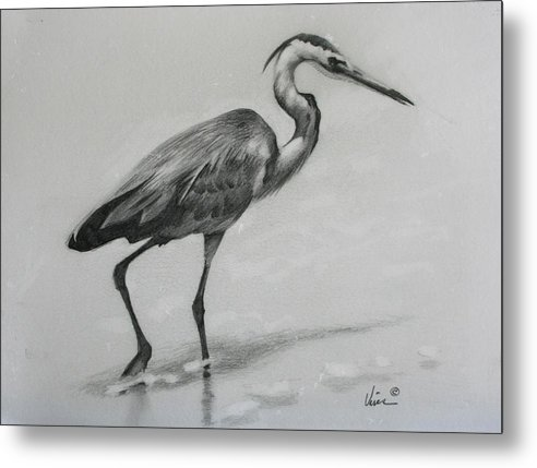 Graphite On Paper Metal Print featuring the drawing Wader by Michael Vires