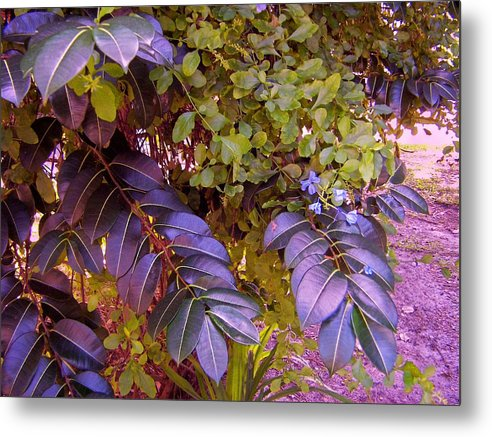 Tropical Plants Metal Print featuring the photograph The Blues Of Green by Charles Peck
