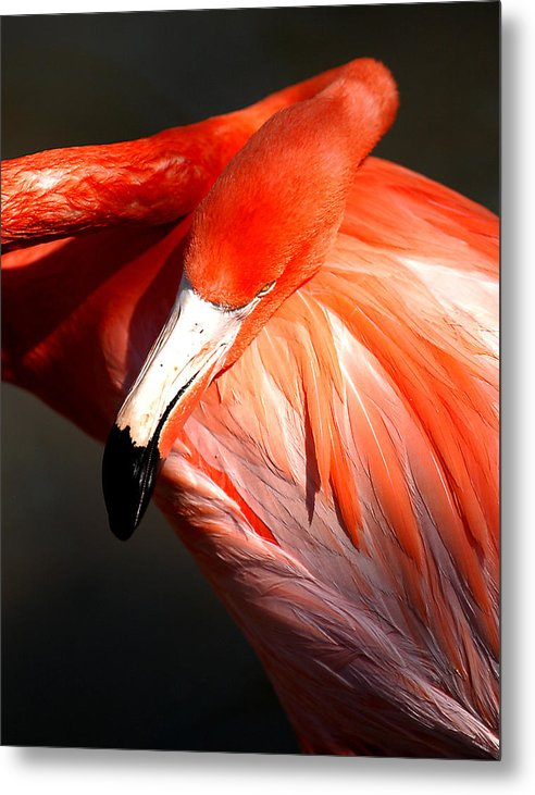 Birds Metal Print featuring the photograph Flamingo - Over The Shoulder by Joseph Reilly
