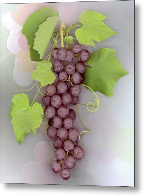 Grapes Metal Print featuring the photograph Grapes on Grapes by Sandi F Hutchins