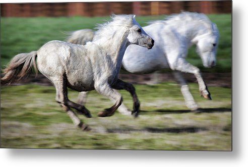 Horse Metal Print featuring the photograph Family by Karen Ulvestad