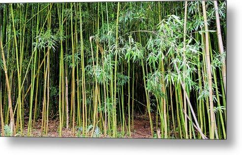 Bamboo Chimes Metal Print featuring the photograph Bamboo Chimes, Waimoku Falls trail, Hana Maui Hawaii by Michael Bessler