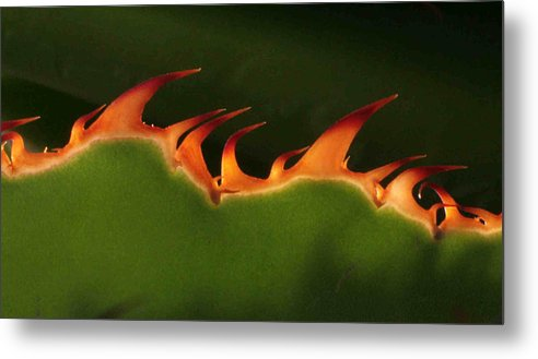 Nature Metal Print featuring the photograph Flaming Aloe by Matt Cormons