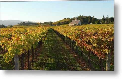Scenics Metal Print featuring the photograph Napa Valley Vineyard In Autumn by Leezsnow